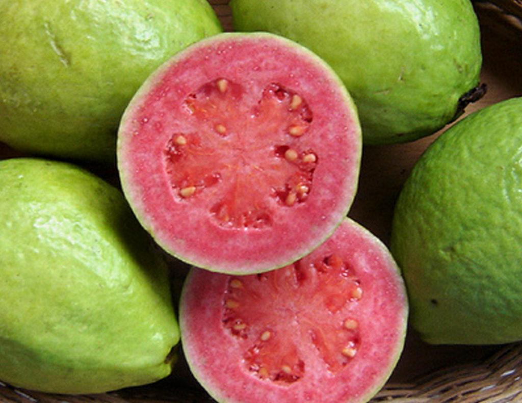 guava-orig